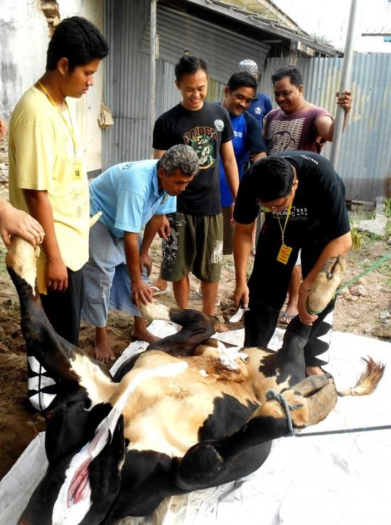 Panitia Qurban lapas Wirogunan tengah memulai menguliti hewan qurban berupa sapi pada Minggu (5/10) di Lapas Wirogunan.